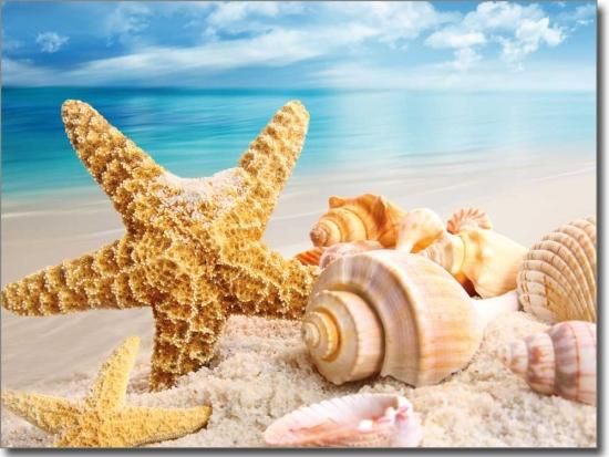 Fotofolie auf wunschma mit einem seestern am strand for Bedruckte klebefolie