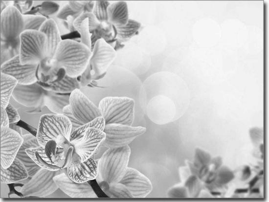 glasdruck pink orchidee fensterfolie mit druck. Black Bedroom Furniture Sets. Home Design Ideas