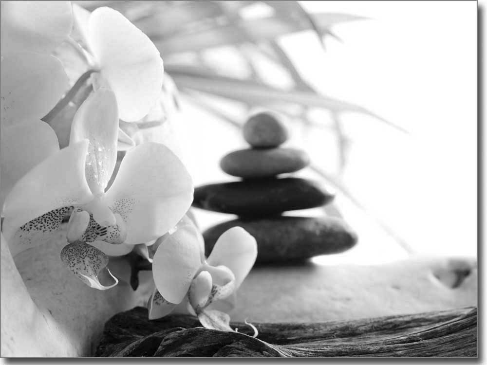 fensterbild orchidee bedruckte glasdekorfolie. Black Bedroom Furniture Sets. Home Design Ideas
