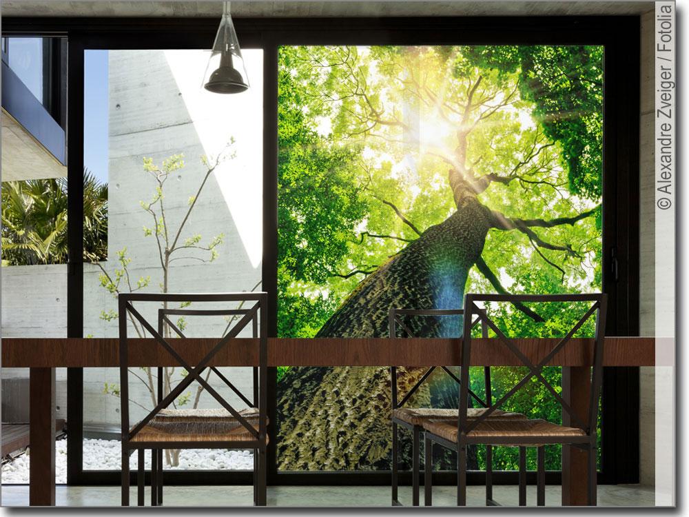 glasdruck baum fotofolie baum f r fensterscheiben. Black Bedroom Furniture Sets. Home Design Ideas